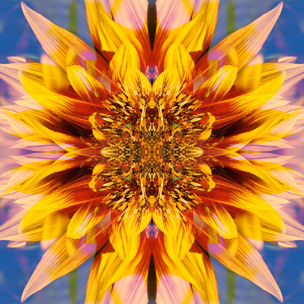 Home Page Sunflower