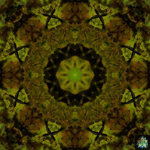 Yellow Bee Mandala 1
